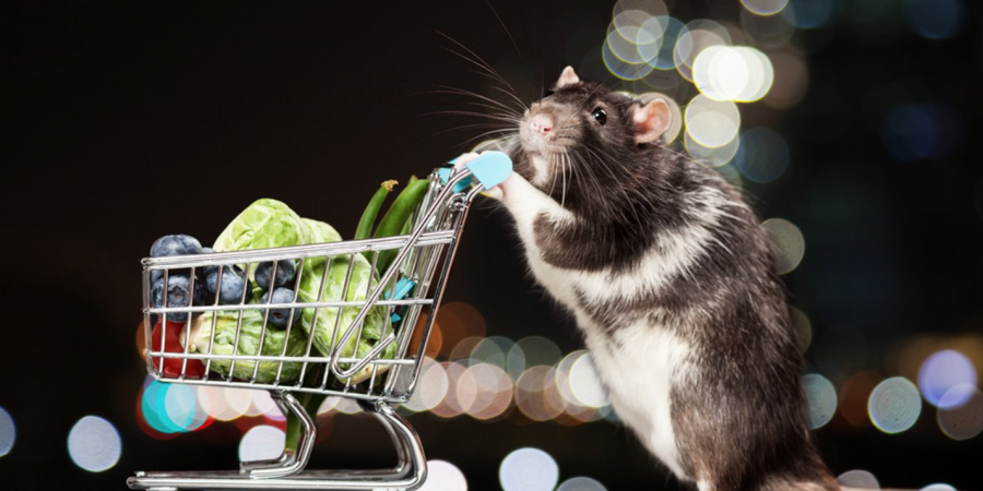 8 Tips for Keeping Out Rodents This Winter