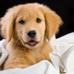 6 Tips for Puppy-Proofing Your Home