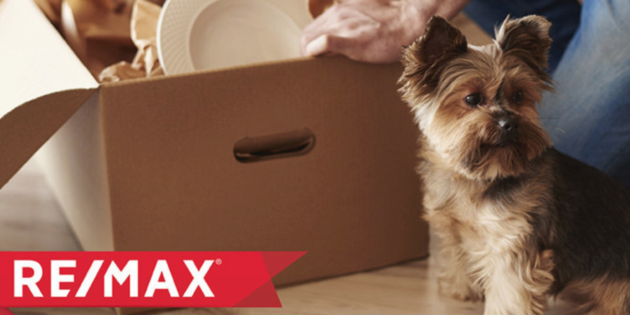 Paw-sitive Reinforcement: 5 Ways to Help Pets Adjust After a Move