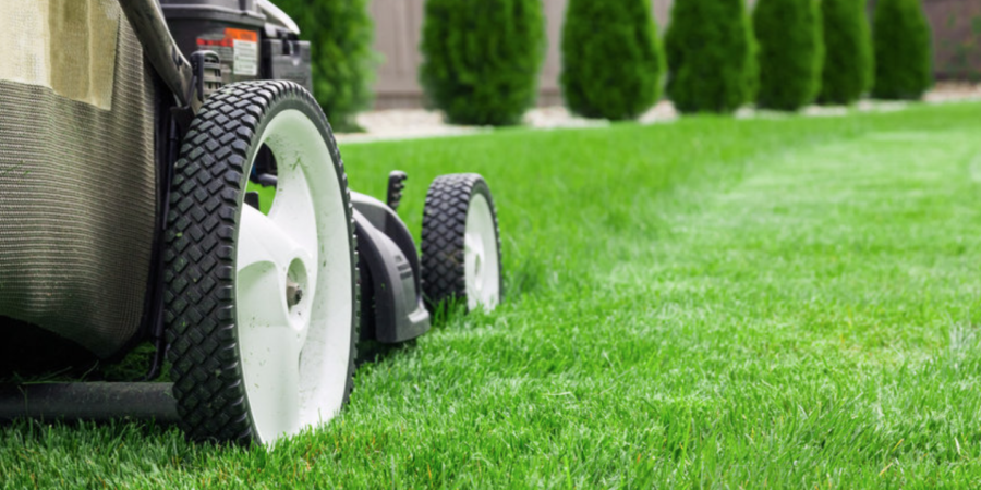 4 Lawn Care Tips For a Lush Spring
